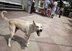 stray dog sterilisation to start in ludhiana