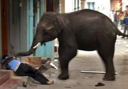 man trampled to death by elephant