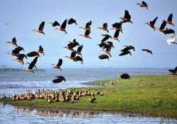 government to notify more than 60 eco sensitive zones in