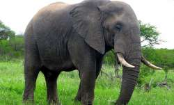 UP BJP MLA's pet elephant tramples 'mahout' to death