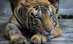 coronavirus animals, animals coronavirus positive, animals at risk, indian zoos on high alert,