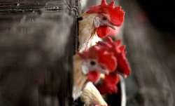 bird flue in delhi