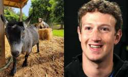 Facebook CEO Mark Zuckerberg shares pic of his goat named 'Bitcoin.' Internet explodes in meme fest