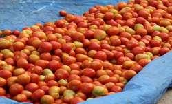 tomato, tomato price